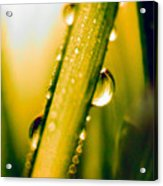 Raindrops On A Blade Of Grass Acrylic Print by Mariola Bitner