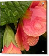 Raindrops On Coral Flowers Acrylic Print
