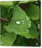 Raindrops On Ginko And Warm Woolen Mittens Acrylic Print