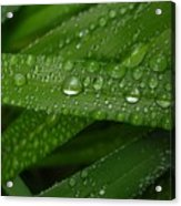 Raindrops On Green Leaves Acrylic Print