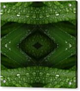 Raindrops On Green Leaves Collage Acrylic Print