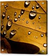 Raindrops On Leaf Acrylic Print
