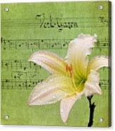 Raindrops On Lily Acrylic Print