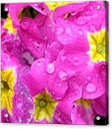 Raindrops On Pink Flowers 2 Acrylic Print by Carol Groenen