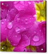 Raindrops On Pink Flowers Acrylic Print