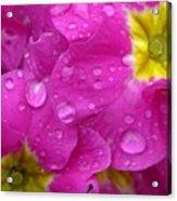 Raindrops On Pink Flowers Acrylic Print