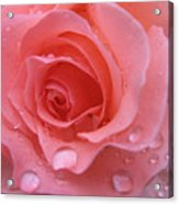 Raindrops On Roses And..... Acrylic Print
