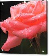 Raindrops On Roses... Acrylic Print
