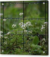 Raindrops On The Garden Fence Acrylic Print