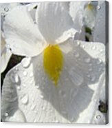 Raindrops On White Irises Flowers Sunlit Baslee Troutman Acrylic Print
