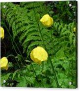 Raindrops On Yellow And Green Acrylic Print