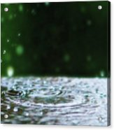 Raindrops Rejuvinate Acrylic Print