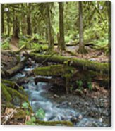 Rainforest At Bridal Veil Falls - British Columbia Acrylic Print