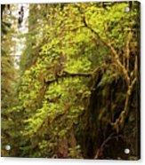 Rainforest Awakening Acrylic Print