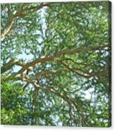 Rainforest Canopy Acrylic Print