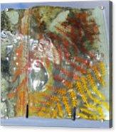 Rainforest Glass Page Acrylic Print