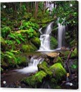 Rainforest Acrylic Print