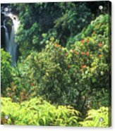 Rainforest Near Hana Acrylic Print