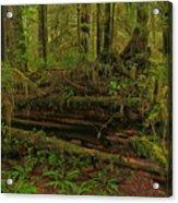Rainforest Nurse Acrylic Print