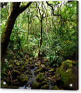 Rainforest Stream Acrylic Print