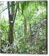 Rainforest Trees Acrylic Print