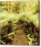 Rainforest Walk Acrylic Print