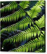 Rainforest Wonder Acrylic Print