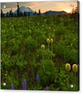 Rainier Wildflower Light Acrylic Print
