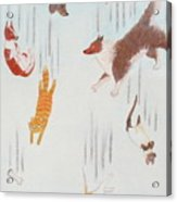 Raining Cats And Dogs Acrylic Print