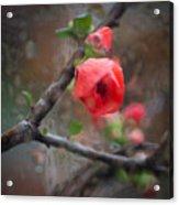Raining Day Blossom  Acrylic Print