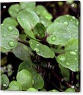 Rainy Day 11 Acrylic Print