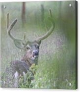 Rainy Day Buck Acrylic Print