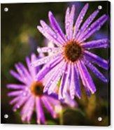 Rainy Day Flowers Acrylic Print