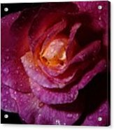 Rainy Day Rose Acrylic Print