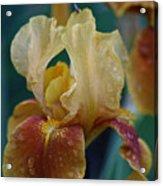 Rainy Iris Acrylic Print