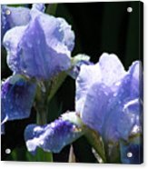 Rainy Irises Acrylic Print