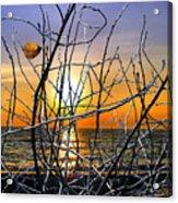 Raising Branches Acrylic Print