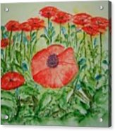 Ramonas Poppies Acrylic Print