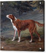 Ranger A Setter The Property Of Elizabeth Gray Acrylic Print