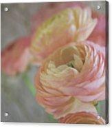 Ranunculus - 6219 Acrylic Print