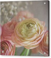Ranunculus - 6243 Acrylic Print