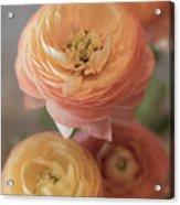 Ranunculus - 6296 Acrylic Print
