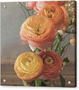 Ranunculus - 6313 Acrylic Print