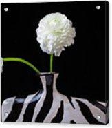 Ranunculus In Black And Whie Vase Acrylic Print