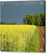 Rapeseed Field With Storm Clouds In Background Acrylic Print