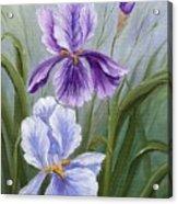 Rapsody Iris Acrylic Print
