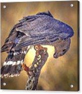 Raptor 22 Acrylic Print