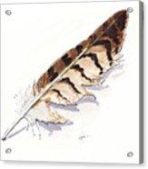 Raptor Feather Acrylic Print