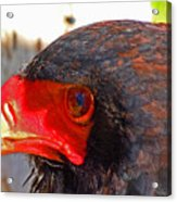 Raptor Head Acrylic Print