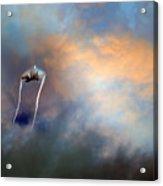 Raptor Vapour Acrylic Print